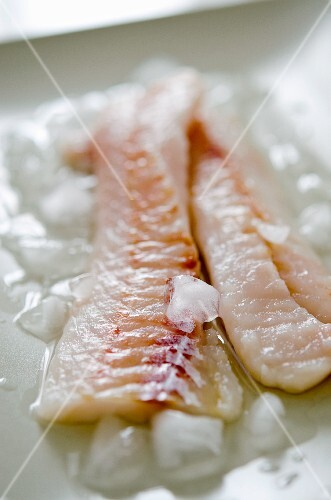 Cod fillets on ice