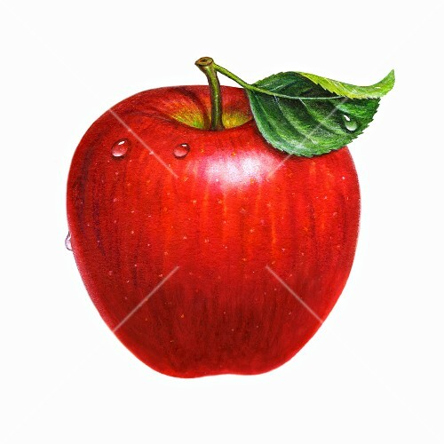 A wet red apple with a leaf (illustration)