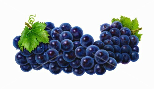 Wet purple grapes with two leaves (illustration)