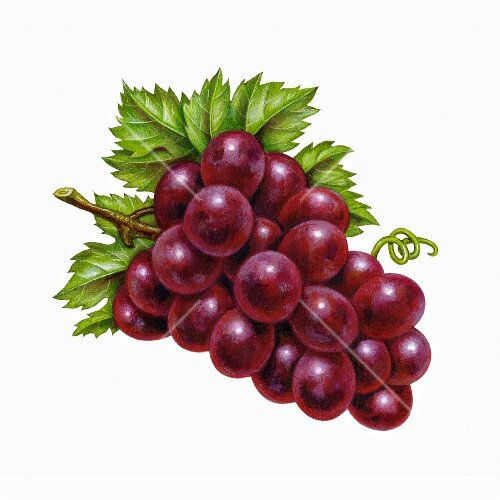 Red grapes with leaves (illustration)