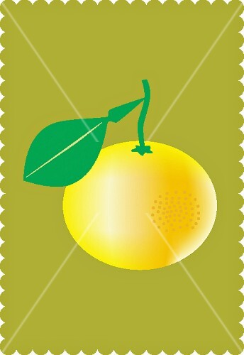 A grapefruit with a leaf against an olive-green background (illustration)