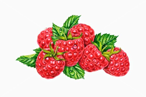 Six raspberries with leaves (illustration)