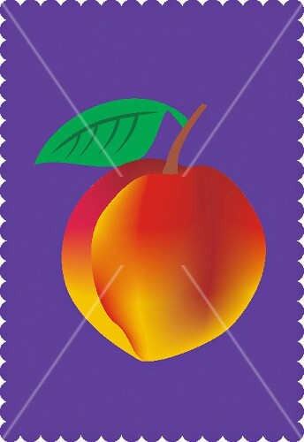 A peach with a leaf on a purple background (illustration)