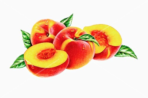 Two whole peaches and two halves (illustration)