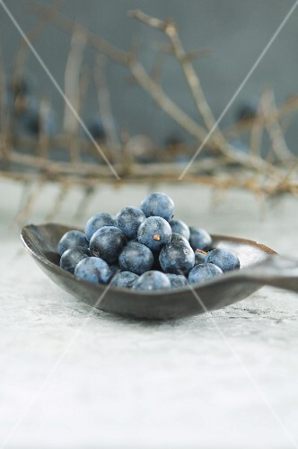 Sloes on a spoon