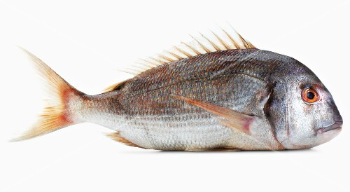 A pink gilt-head bream against a white background