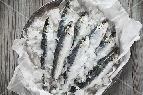 Raw sardines on ice