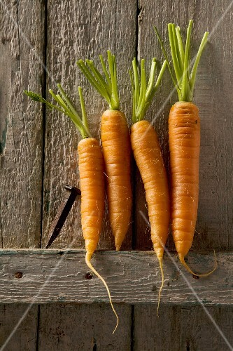 Four carrots leaning against a rustic wooden wall
