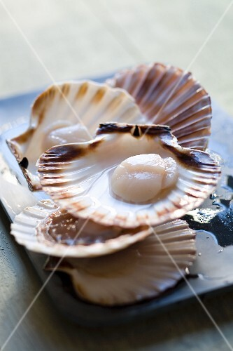 Opened fresh scallops