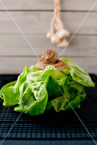 Fresh Head of Boston Lettuce with Garlic Bulbs Hanging in the Background