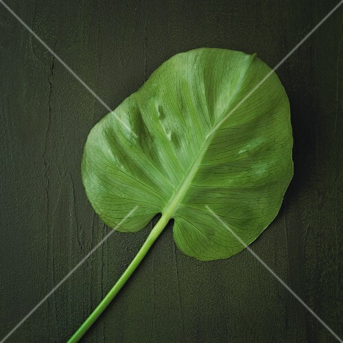 An exotic leaf