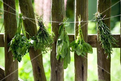 Bunches of herbs hanging against a wooden fence