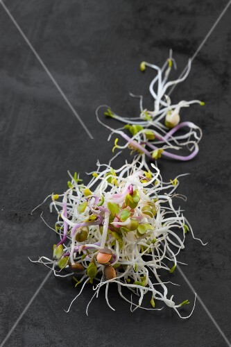 Radish, lentil, alfalfa and mungo bean sprouts (organic) on a dark surface