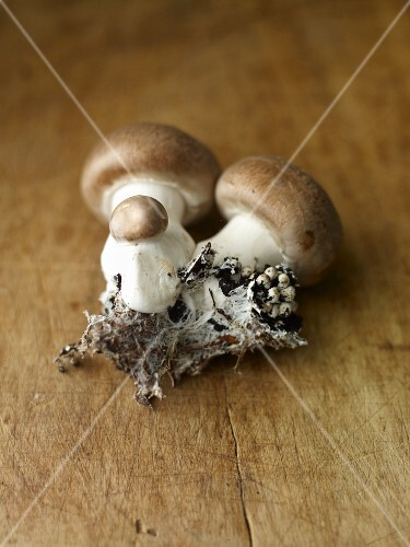 Fresh brown mushrooms with soil on a wooden surface