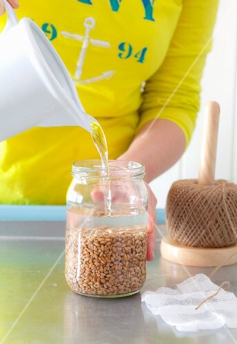 Water being poured into a sprouting jar of wheat grains