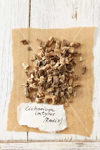 Dried chicory root (Cichorium intybus)