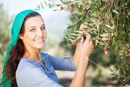 A young woman with a headscarf picking olives