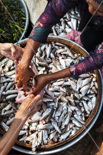 Fish being sold at a market (Phnom Penh, Cambodia)