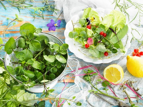Lettuce with watercress, sugar snap peas, redcurrants and a rose petal