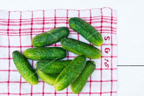Fresh pickling cucumbers on a tea towel