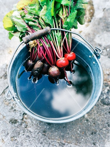 Beetroot in a bucket of water