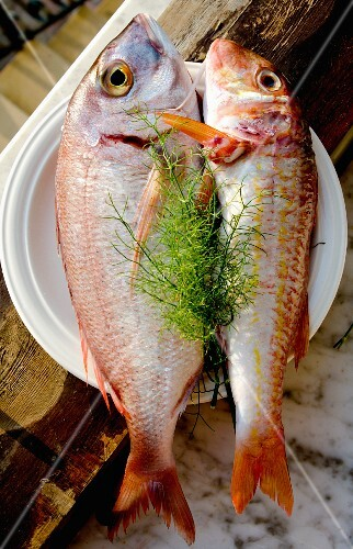 Rose fish and red mullet on a plate with fennel tops