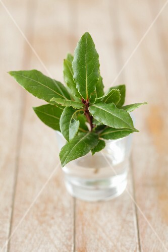 A sprig of fresh bay leaves in a glass of water