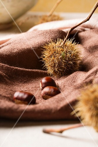 Sweet chestnuts on a brown cloth