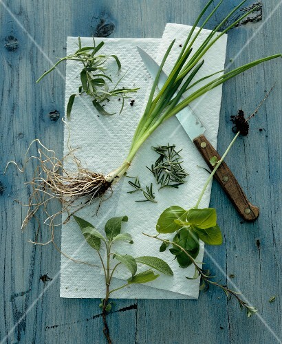 Assorted fresh herbs on kitchen paper (view from above)