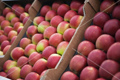 Lots of red apples in crates