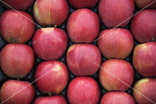 Red apples in a crate (view from above)