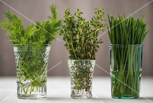 Fresh dill, thyme and chives in glasses of water
