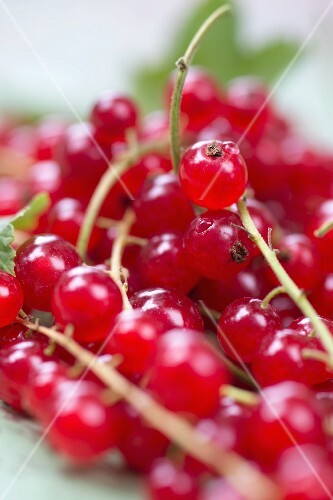 Redcurrents (Close up)