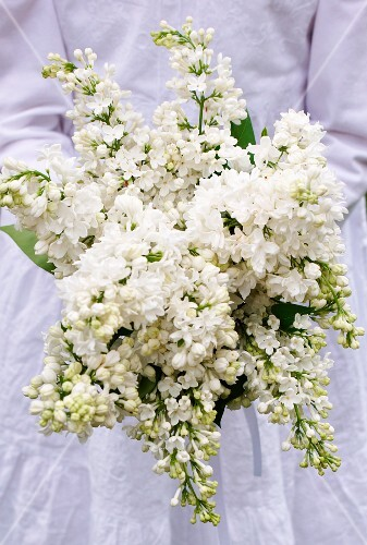 A girl holding a bunch of white lilacs