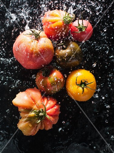Tomatoes being sprayed with water