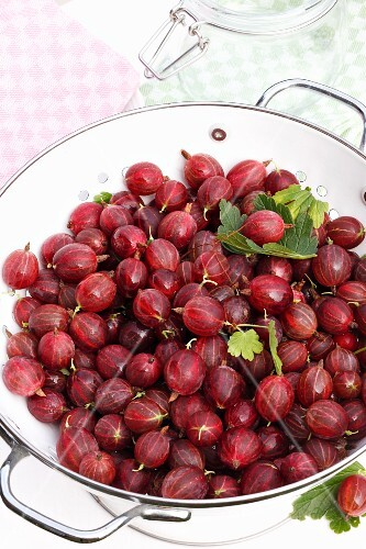 Red gooseberries in a colander