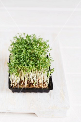 Fresh cress on a chopping board