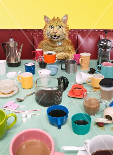 A cat sitting at a table covered in cups of coffee