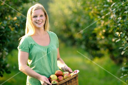 Young woman collecting apples.