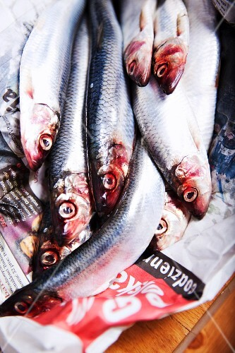 Fresh anchovies on newspaper