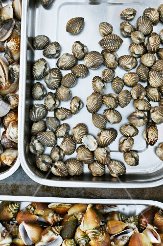 Fresh sea snails and mussels
