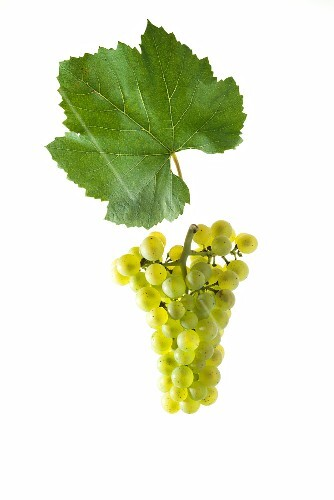 Chardonnay grapes with a vine leaf