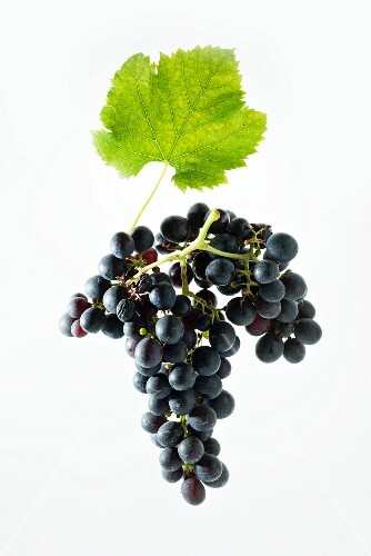 Shiraz grapes with a vine leaf