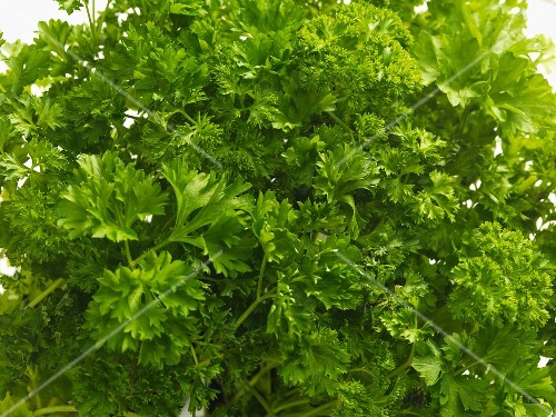 Fresh parsley (close-up)