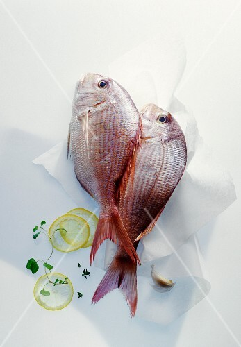 Two sea bream on paper