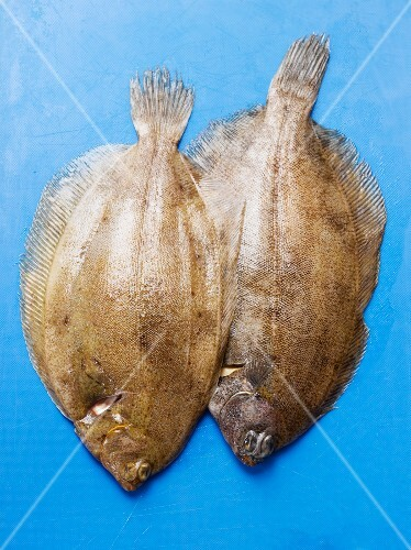 Two fresh lemon soles