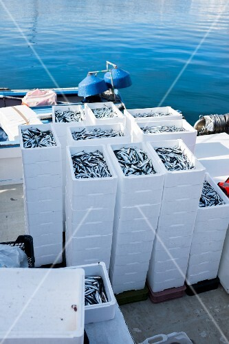 A stack of crates with freshly caught anchovies and sardines