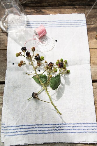 A sprig of blackberries on a garden table