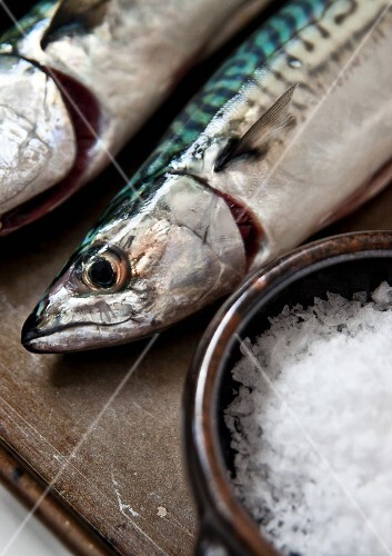 Freshly caught mackerel and a dish of sea salt