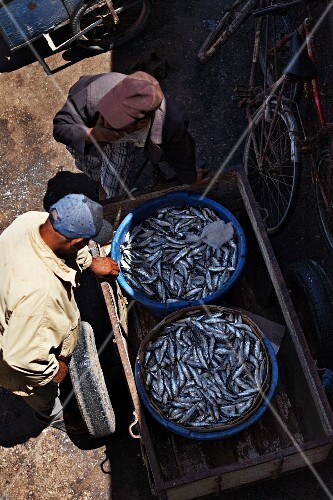 Two buckets of sardines in the harbor of Essaouira, Morocco